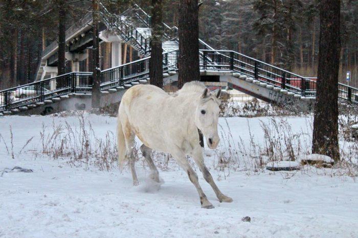 Прогулки на лошадях в Екатеринбурге. Обучение верховой езде. Катание на пони